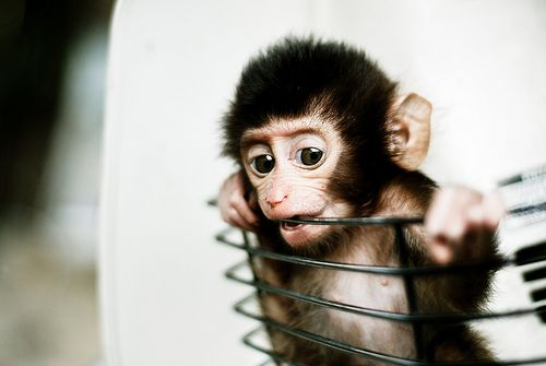 Baby Monkey in a Basket by Mohd Khomaini Bin Mohd Sidik, via Flickr