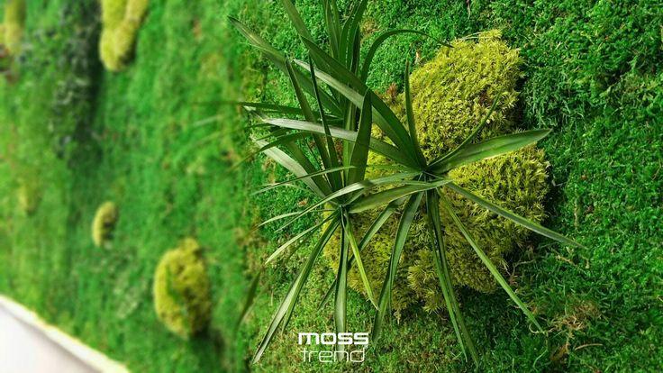 Jungle Moss oczywiście od Moss Trend. Jeśli szukacie alternatywy dla zielonych ścian (wymagających stałej pielęgnacji i podlewania), koniecznie zwróćcie uwagę na Jungle Moss. - nie wymaga podlewania - nie wymaga systemów irygacyjnych - projekt ściany na indywidualne zamówienia - wiele rodzajów roślin stabilizowanych (kwiaty, mech, liście) - Jungle Moss żyje dzięki wilgotności pomieszczenia (min. 45%)