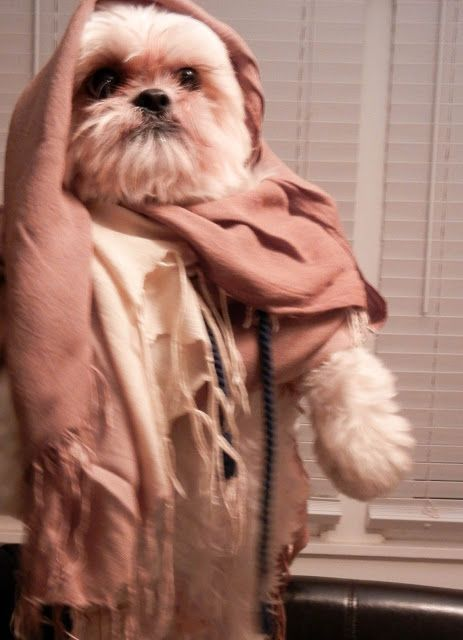 ewok dog costume shih tzu 46 best images about shih tzu on pinterest dog show 3846