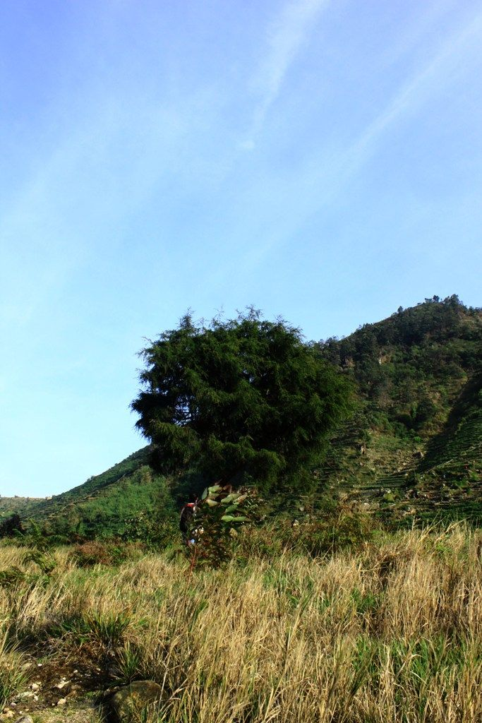The Savanna at Telaga Cebong, Dieng