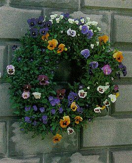 Another beautiful pansy wreath: Gardens Ideas, Living Pansies, Decor Ideas, Pansies Wreaths, Plants, Pansies Gardens, Living Wreaths, Gardens Archives, Pansies Living
