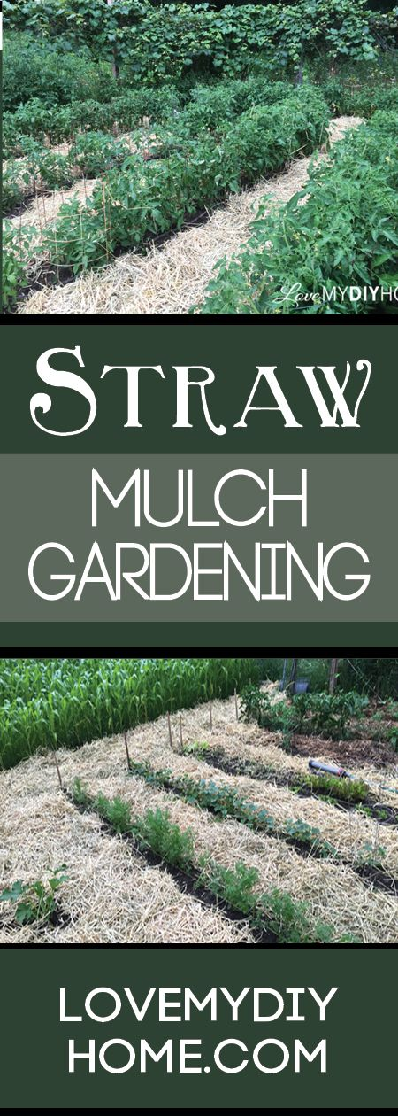 This is a great way to lessen the weeds we have to pull - mulch with straw! (Love My DIY Home} #mulching #gardening #weeding