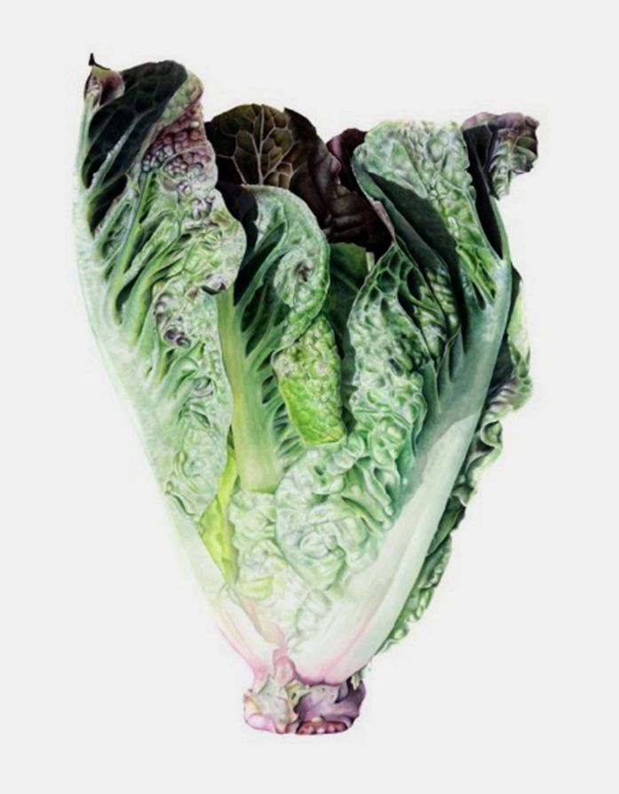 Ботанические мотивы в акварелях английской художницы Elaine Searle - Ярмарка Мастеров - ручная работа, handmade