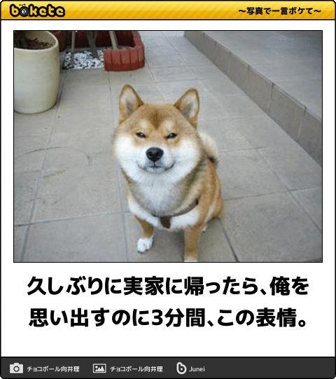 夏の終わりは笑いと共に!ツボをジワジワ突いてくる犬のボケて17選 | CuRAZY [クレイジー]