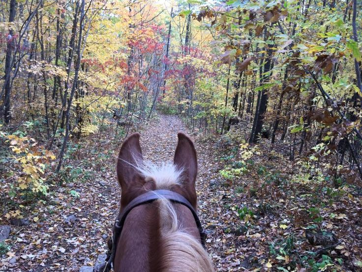 Horseback riding at #horsecountrycampground Foresters Falls, ON