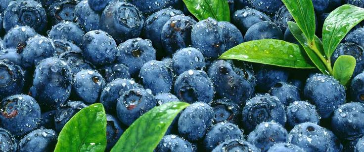 Blueberries are in season now, and are amazing for your health. They also taste delicious.