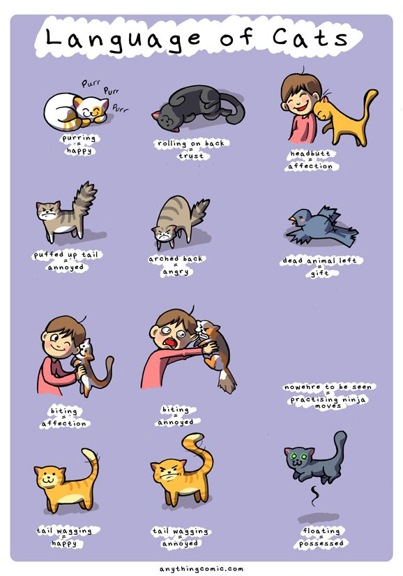 Language of cats