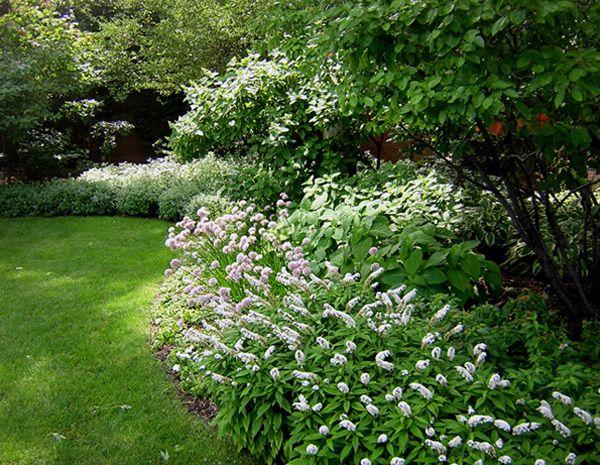 Whites In Shady Garden