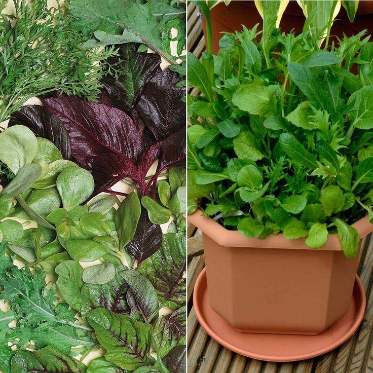 Salad 'Niche' Collection - Salad Seeds - Thompson & Morgan Worldwide