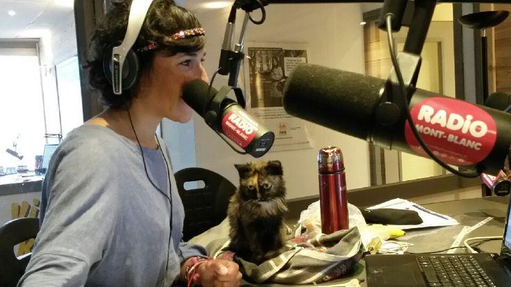 Un chat à Radio Mont Blanc!!! Voici notre nouvelle #animatrice #radio sur #radiomontblanc !  #Jacqueline #radio #live #direct #30millionsdamis #chatte #cats #montblanc #montblancmorning #morning #hautesavoie #74 Kitten in Radio Mont Blanc's Studio
