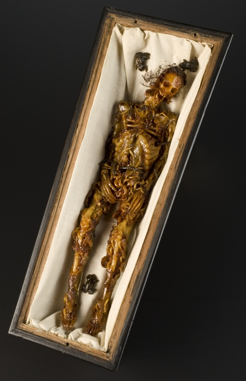 Wax model of a decomposing body in a walnut coffin, Italy, 1774-1800   The body in this wooden coffin is in a severe state of decomposition. It may have had two purposes: as 'memento mori', a reminder of death, or as a teaching aid. The creation of wax anatomical models, centred in Italy, was based on observing real corpses. The museum known as La Specola, or 'the observatory', in Florence was famous for its wax collection.