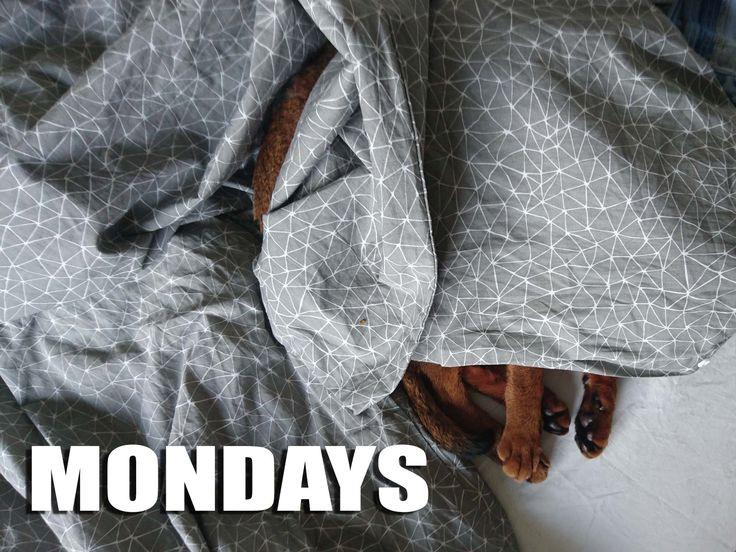 Mandagskat #mandag #Mondays