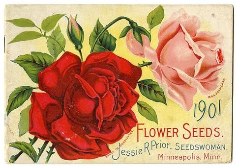A red and pink rose ... Such timeless flowers on the front cover of Jessie Prior's 1901 seed catalog.