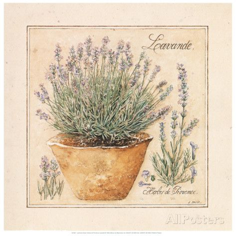 Herbes de Provence II Posters by Laurence David at AllPosters.com