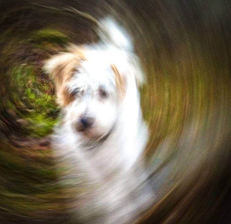 Suzie spinning around the forrest