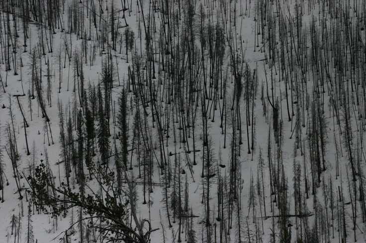 Snake River Canyon Winter