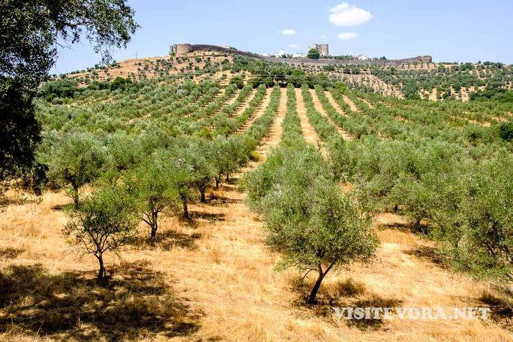 Em Evoramonte (Évora Monte) escreveu-se a História de Portugal. Visitar Evoramonte é conhecê-la avistando os campos do Alentejo do alto da Serra d'Ossa.