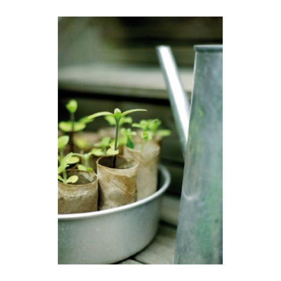 Recycled Toilet Paper Rolls For Plant Starters Pour Le