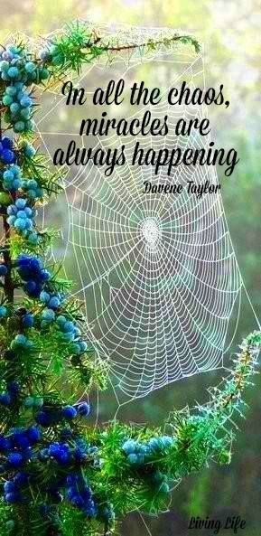 ~☆~miracles are always happening~☆~