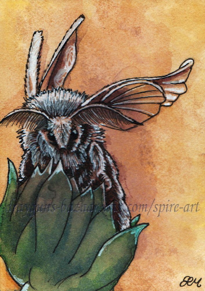ACEO Original Art Poodle Moth Insect Wings Plant Realism Illustration SMcNeill #Miniature #ebay #aceo #art #moth #realism