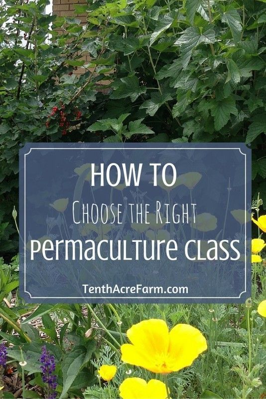 How to Choose the Right Permaculture Class: An internet search will bring up all kinds of choices for taking permaculture classes or courses, but how in the world is one to choose? Here are some tips for finding the right permaculture course and instructor to meet your needs.
