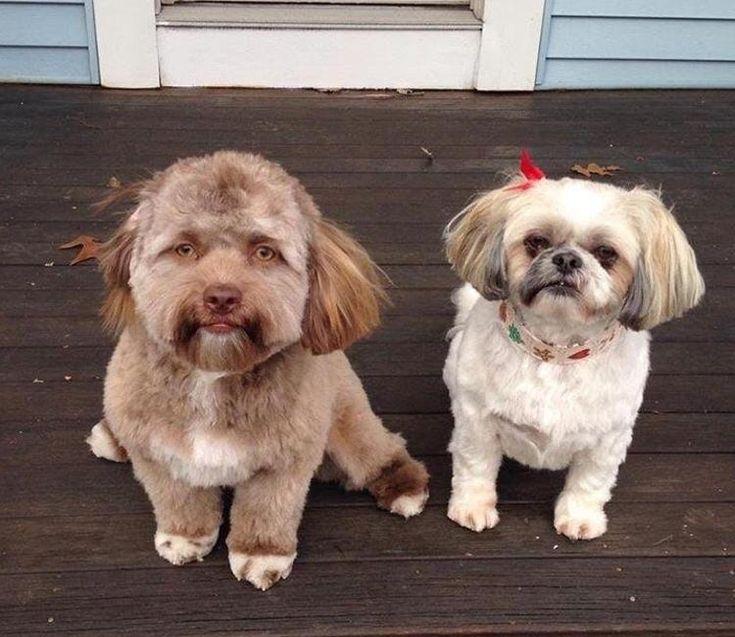 """""""Un amigo de un amigo publicó una foto de su perro en Facebook. Parece que tiene cara de hombre"""": #bob #perro #perros #animales #animal #mascota #mascotas #dog #dogs #pet #pets #puppy #puppylove #cachorro #cachorros #foto #fotos #noticia #noticias #viral"""