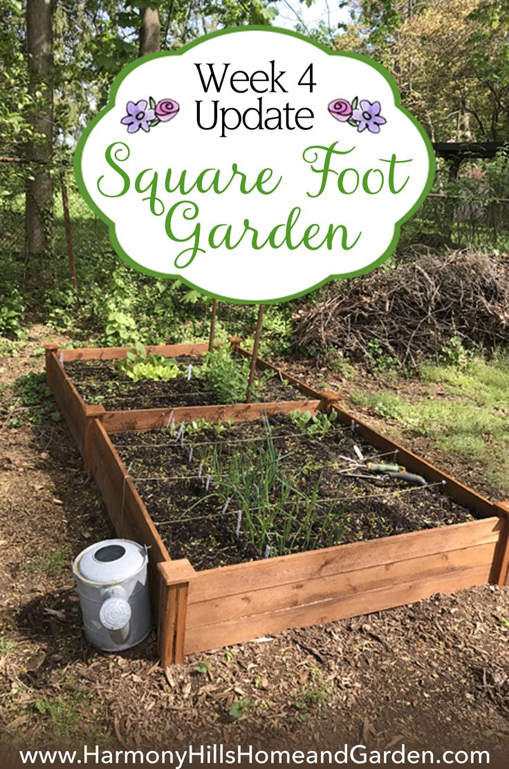 Square Foot Garden Week 4 Update