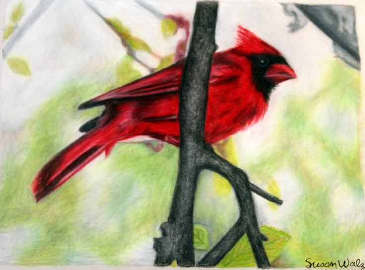Drawing of a Male Cardinal by Susan Walz Design