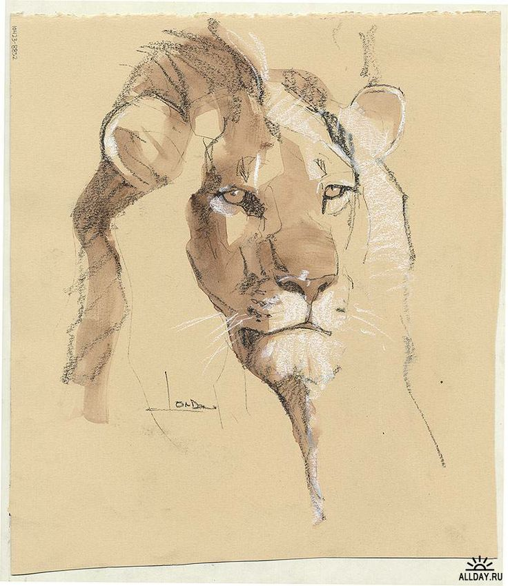 Animal artist Anne London