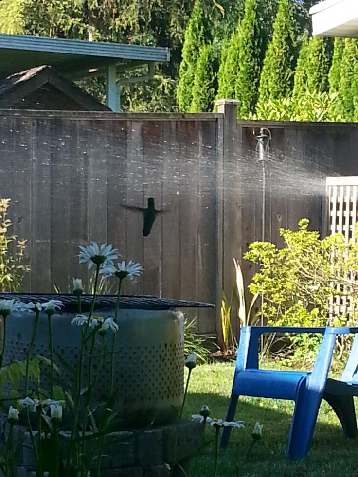 My humming bird friend popped by every day in 2014 for a quick drink. This year I have not seen my buddy?