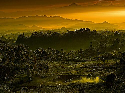 Layering...wow so beautiful. Location : Ciwedey - Bandung - West Java - Indonesia