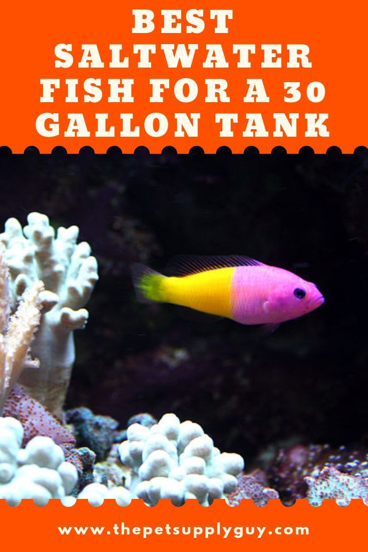 Best Saltwater Fish For 30 Gallon Tank Saltwater Aquarium Fish