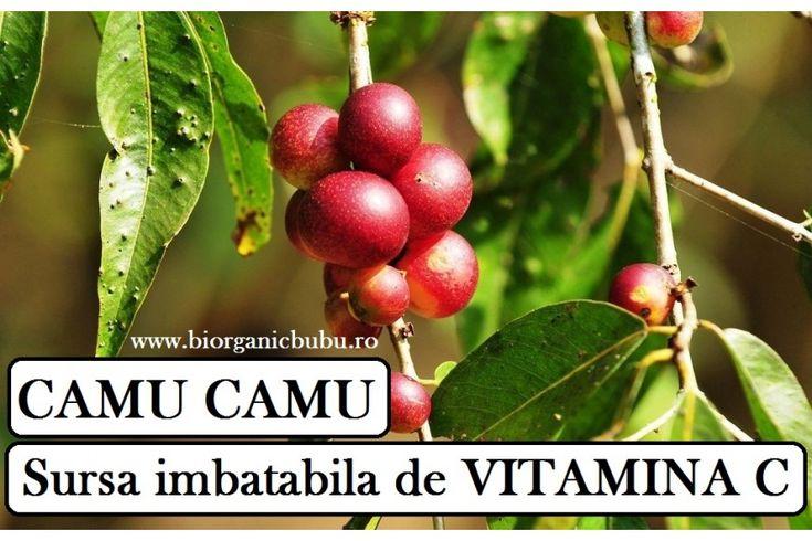 CAMU CAMU sursa imbatabila de Vitamina C