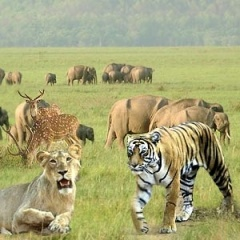 Located in Nainital of Uttarakhand, Jim Corbett National Park is an important wildlife destination in India. It acts as a protected area for the endangered Bengal tigers in the country. Initially it was set up as Hailey National Park in 1936. The Project Tiger running at this park is known globally as a successful wildlife project in recent times.