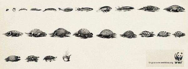 6. Poco después, en las islas Galápagos, Darwin se dedicó a buscar indicios de un antiguo «centro de creación», y encontró variedades de pinzones que estaban emparentadas con la variedad continental, pero que variaban de isla a isla. También recibió informes de que los caparazones de tortugas variaban ligeramente entre unas islas y otras, permitiendo así su identificación.