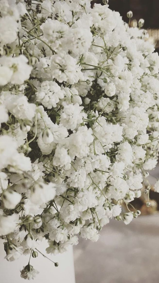 Baby Breath Flowers In 2020 Baby S Breath Wedding Flowers Flowers For Sale Wholesale Flowers