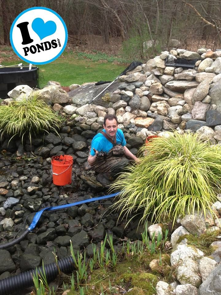 Your pond may look clean from the surface but deep down in the rocks and gravel muck accumulates and its important for the health of your ecosystem and koi fish to have a pond cleaning at least once a year.   For more information visit: www.iloveponds.com/water-features/pond-maintenance.html