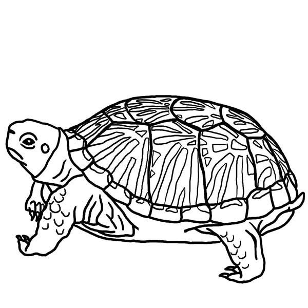 Turtle Turtle Hide His Head Coloring Page Turtle Coloring Pages Animal Coloring Pages Bird Coloring Pages