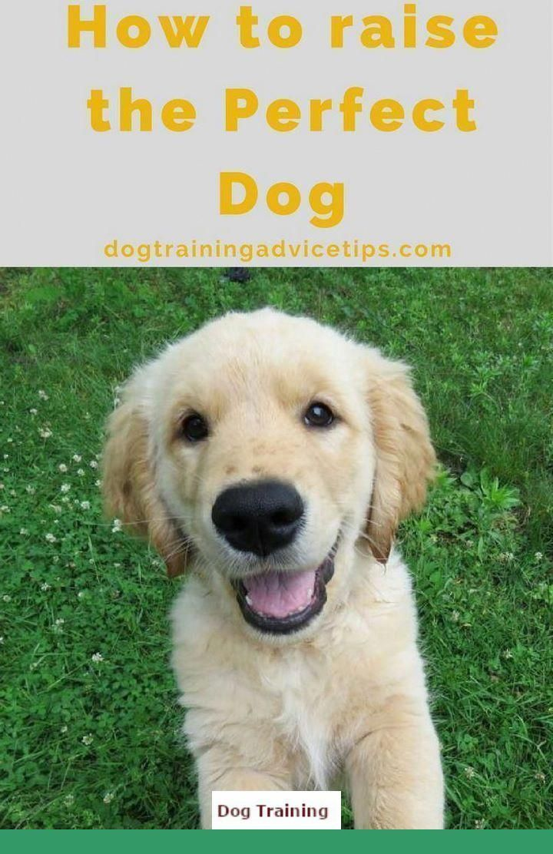 Dog Behavior Training Tips Dogtrainingmyluv Howtotrainapuppy