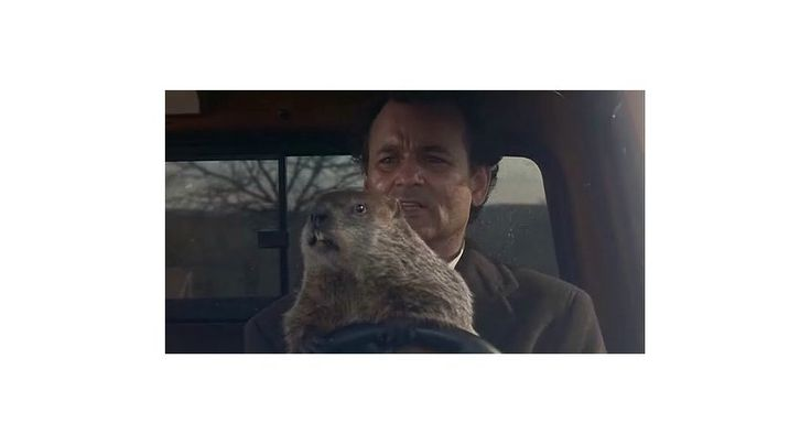 ¿Qué base científica tiene el Día de la Marmota?   Phil no busca la primavera, solo inicia su ritual de apareamiento