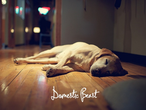 Domestic Beast • Lyme disease and dogs: our beast friend's story