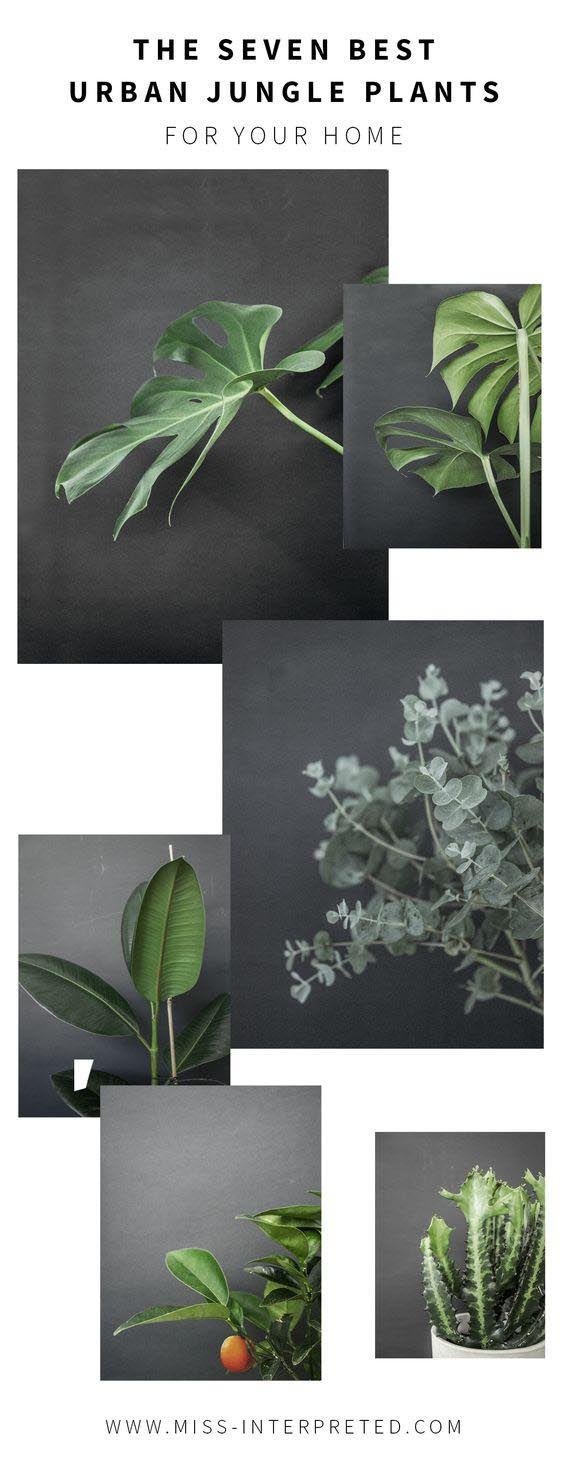 die sieben besten pflanzen die aus deiner wohnung einen. Black Bedroom Furniture Sets. Home Design Ideas
