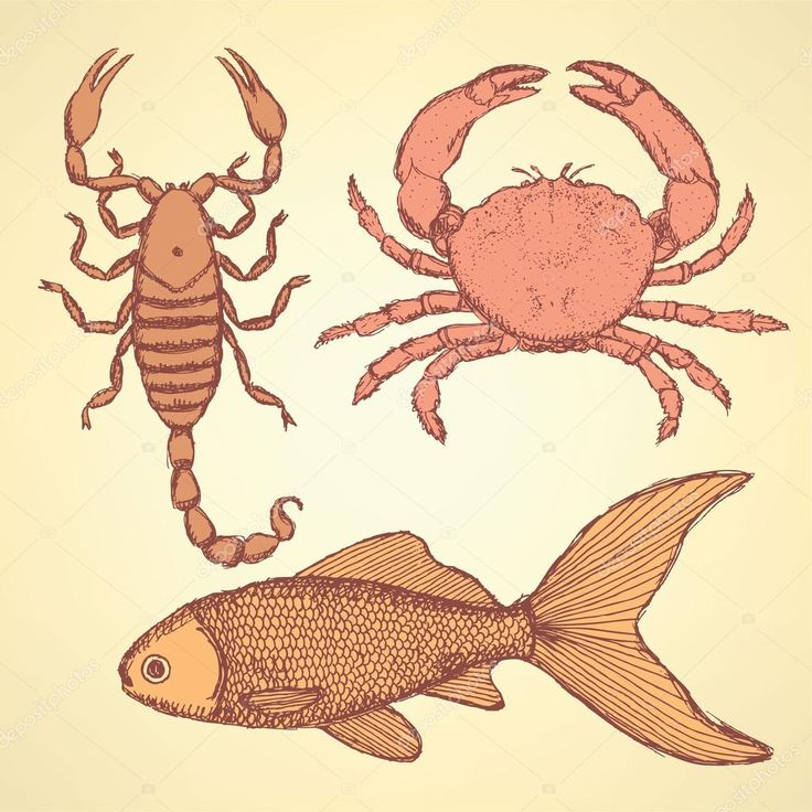 Krebs Aszendent Fische