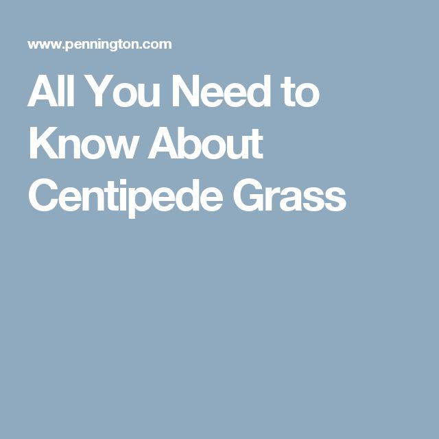 All You Need to Know About Centipede Grass