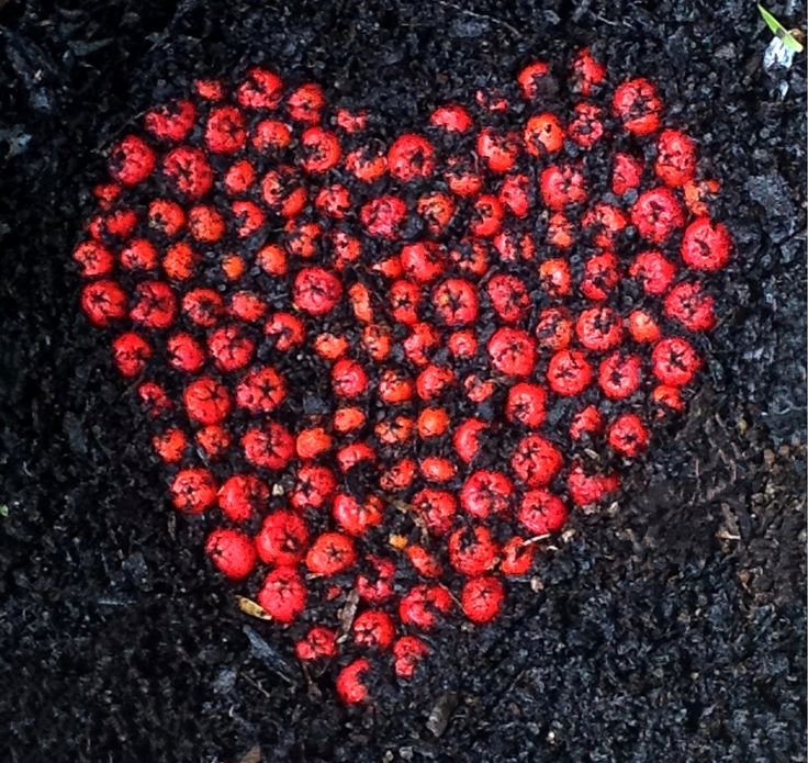 A close-up of a heart created in the front garden.