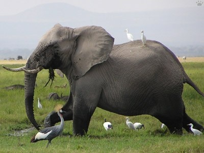 Nairobi Day Trip Itinerary: One Day Trips to Nairobi Sites and Attractions Nairobi Day Trip Itinerary: One Day Trips to Nairobi Sites and Attractions    Nairobi Day Trip Packages are offered from Nairobi hotels and you can go to several parks including Amboseli, Nakuru, Nairobi and Longonot or mt Kenya