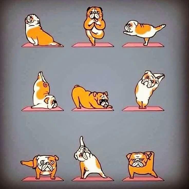 428 Best Images About Yoga Memes On Pinterest