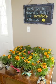 You Are My Sunshine Baby Shower - Marigolds Potted Flower Favor   Chalkboard Name Label