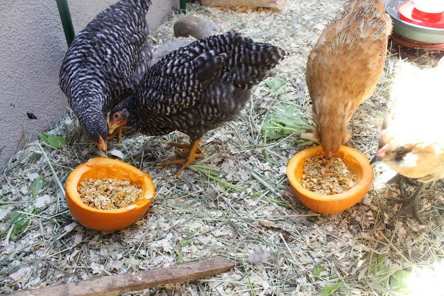 grind up pumpkin seeds and feed it to chickens as a natural dewormer