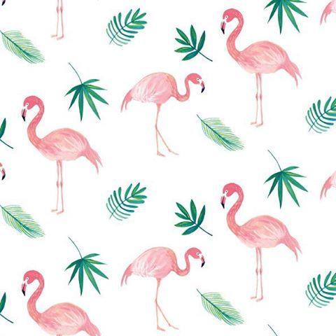 Flamingos tropicales